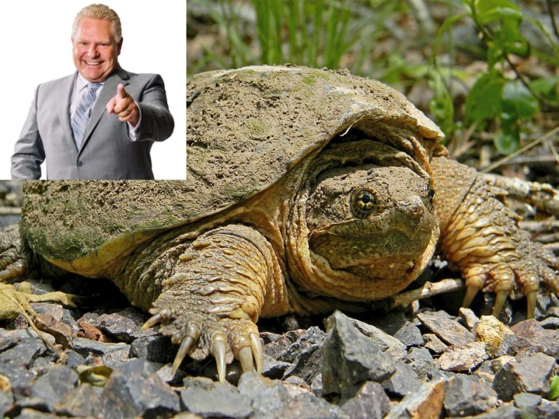 Snapping turtle keeps Greenbelt home after donating $100,000