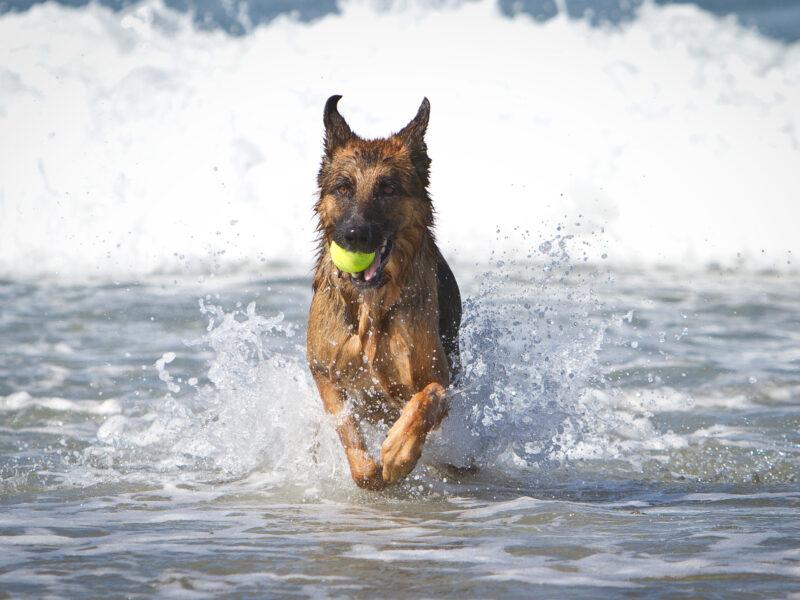 Lost Dog Finds Himself In Bali