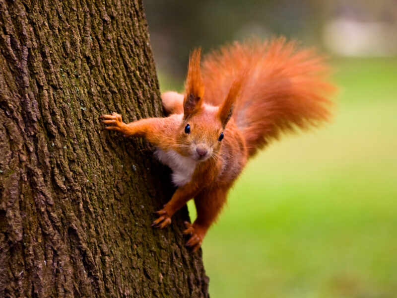 Police arrest dealer responsible for selling speed to world population of squirrels