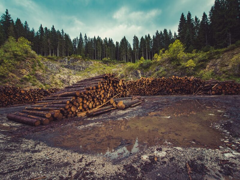Hundred Acre Wood unrecognizable after years of unregulated resource extraction - The Beaverton